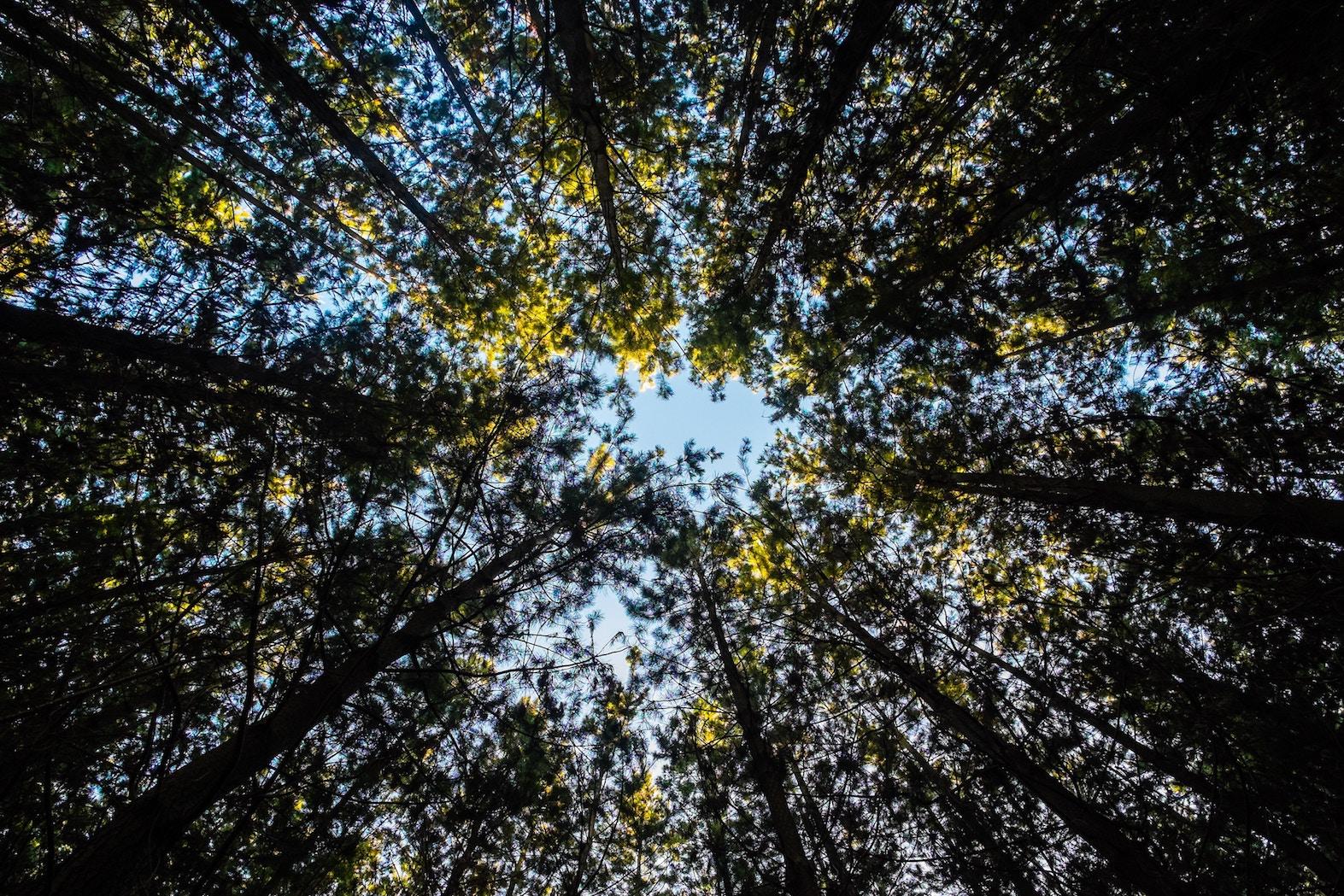 Ympäristötekniikan opiskelu käytännössä - Ilmastonmuutos